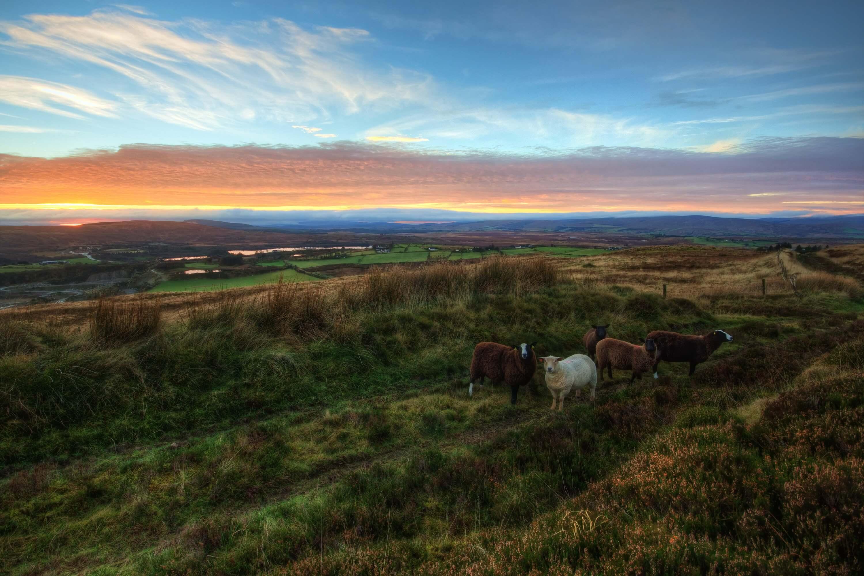 horses Ireland