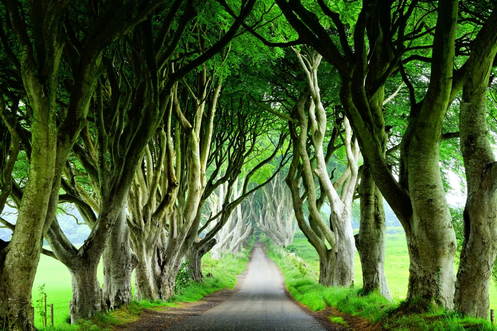 Dark Hedges in Stranocum, Co. Antrim