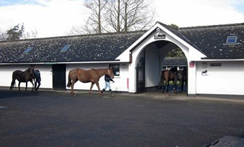 9 Day Irish Legends - National Stud - Large Coach tours